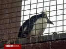 Com ciúmes de pandas, pinguins descontam no público de zoo