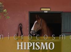 Segredos do esporte: Equipamento garante elo entre cavalo e cavaleiro