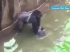 Abaixo-assinado pede que pais de menino que caiu em jaula de gorila sejam processados por negligência