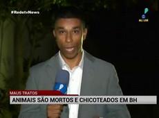 Minas Gerais registra dois casos de maus tratos a animais