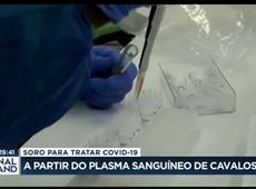 Soro para tratar Covid-19 pode vir do plasma dos cavalos