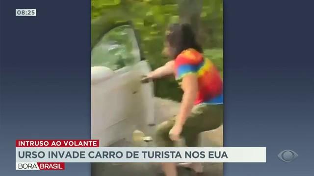 Urso invade carro de turista nos Estados Unidos