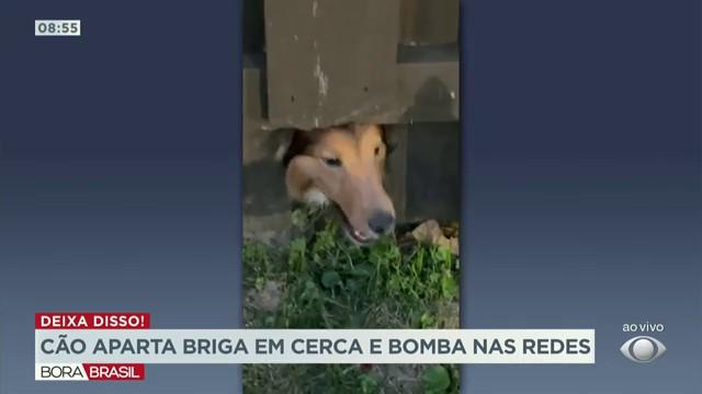 Cão aparta briga em carca e bomba nas redes sociais